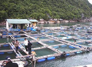 Asia-Pacific Dominates World Aquaculture Accounts For 89.1 percent Of Fish Supply