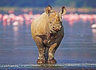 Vietnamese Nationals Caught Smuggling Rhino Horns In South Africa