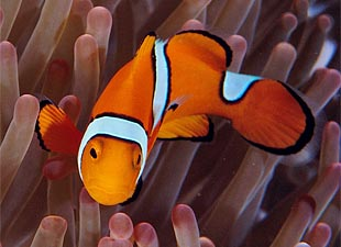"""Study: Carbon Dioxide Is """"Driving Fish Crazy"""""""