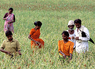 Australian Researchers To Study Chronic Disease In Rural India