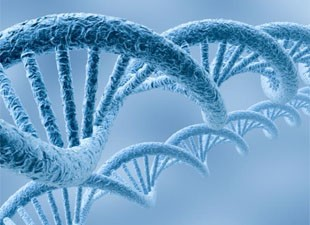 Novel Genetic Markers For Cancer Risk Uncovered In Large International Study