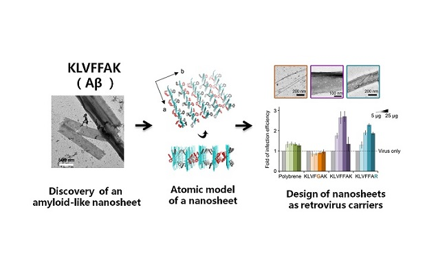 Amyloid-like Nanosheet Structure Discovered
